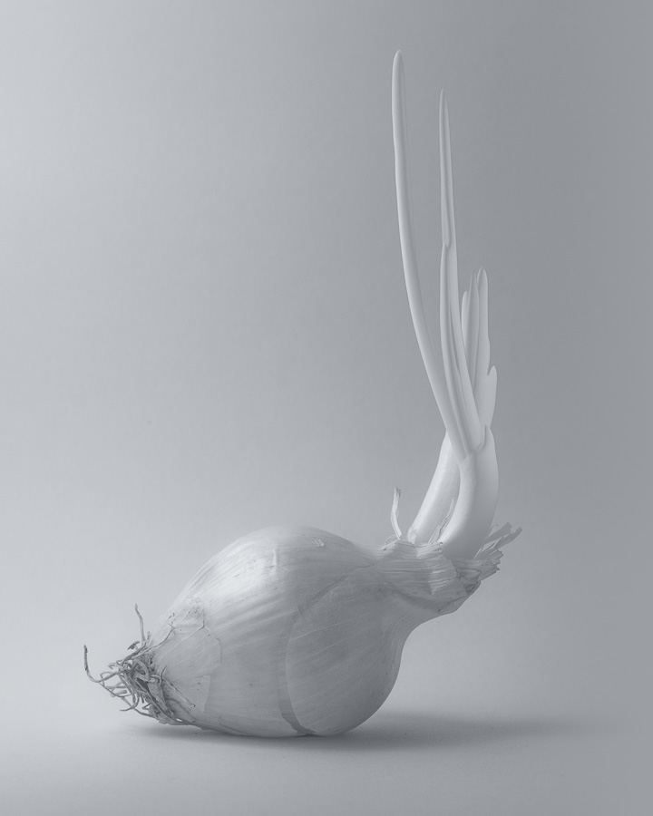 Onion in infrared. Black and white. Shades of gray.